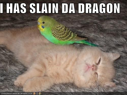 funny-pictures-bird-slays-kitten.jpg