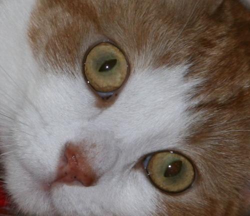 fifi-eyes1